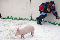 Istra, Russia, 06/03/2011..A blindfolded teenage boy chases a piglet as people celebrate Maslenitsa, also known as Butter Week or Pancake Week. Maslenitsa marks the beginning of the Russian Orthodox period of Lent, but is a traditional Russian Holiday marking the end of winter, and has its origins in pagan times.