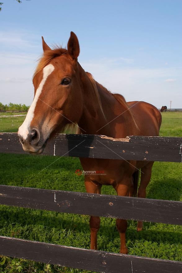 Q Horses For Sale Crone Quarter Horses For Sale