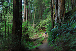 Man hiking in coast redwoods at Forest of Nisene Marks State Park