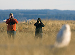 Bird watchers view Snowy Owls as they make an appearance  at Damon Point, Grays Harbor County, Washington on February 5, 2012. The rare visitors from the Arctic will be staying in the area, feasting on small mammals and fattening up before departing in March headed on their way back to the Arctic to breed.  ©2012. Jim Bryant Photo. All Rights Reserved.