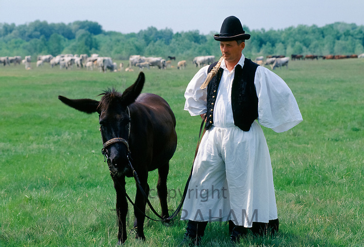 Hungarian Csikos cowboy with mule horse on The Great Plain of Hungary  at Bugac, Hungary