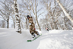 Boarders and skiers dodge the trees along the off-piste runs at  Hanazono ski ground in Niseko, northern Japan on Feb. 6 2010. Niseko's annual snowfall is around 15 meters. Rob Gilhooly Photo (credit required)