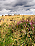 Fence and Dune Grasses in the Breeze under a Dark Sky near Amble Northumberland England
