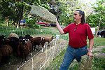 Jeff Ferrell feeds his sheep at their home in Lincoln, CA May 13, 2009.