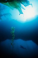 CHANNEL ISLANDS NATIONAL PARK, CA:  Ralph Clevenger explores an underwater arch while SCUBA diving in the Channel Islands National Park. (Model Released)