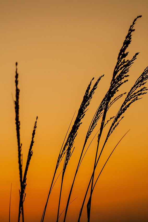 Grasses at the Beach