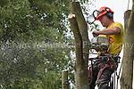 Philip Allen Tree Surgery