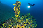 Wrecks of Vis, Croatia