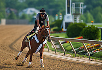 Kentucky Derby winner I'll Have Another exercises on May 16, 2012 in preparation for the 137th running of the Preakness Stakes at Pimlico Race Course in Baltimore, Maryland