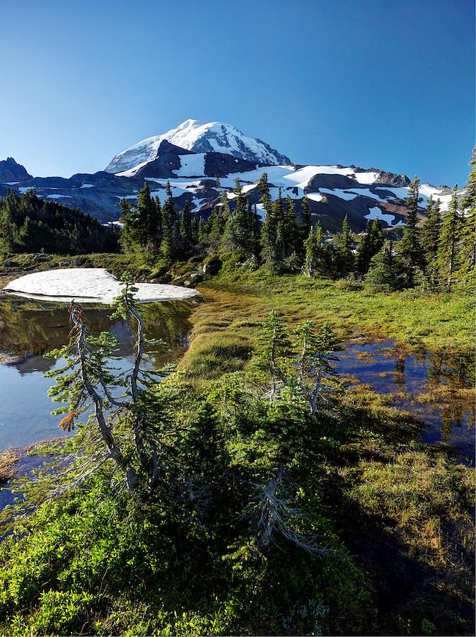 Subalpine meadow with ponds, Spray Park, Mount Rainier National Park, Washington State, USA