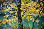 A slow flowing river in autumn with yellow leaves on a tree on the river bank