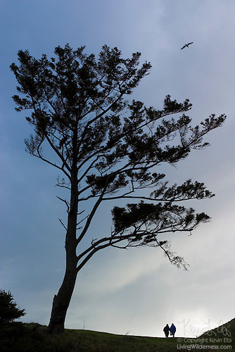 Couple Under Wind-Swept Tree, Ecola State Park, Oregon