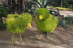 Topiary Easter Chicks in Sibley Horticultural Center at Callaway Gardens in Pine Mountain, Georgia. Callaway Gardens, which is especially famous for its azaleas, boasts 13,000 acres of gardens and Georgia countryside, plus a conservation nature preserve, extensive education programs, and a very impressive resort as well.