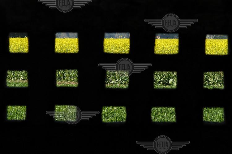 Mustard fields seen through an open brick wall.