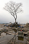 Members of Japan's Ground Self Defence Forces search through the remains of a home that has been battered into a tree in Higashimatsushima, Miyagi Prefecture, Japan on  23 March 20011.  .Photographer: Robert Gilhooly