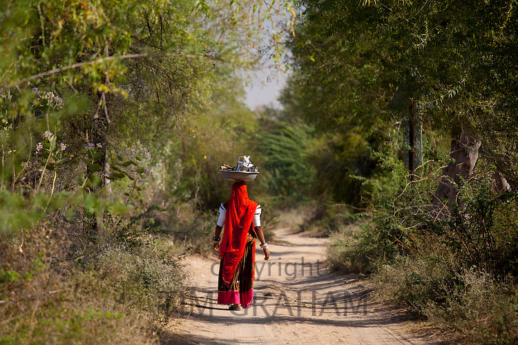 Indian Bishnoi woman carrying bowl for lunch for agricultural workers  near Rohet in Rajasthan, Northern India