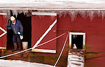January 05, 2004  --  Ice abounds a small barn off of Hwy 14 near Vancouver with a duck not willing to brave the cold for a bite to eat. ...KEYWORDS: snow, weather