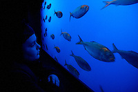 Draven Anderson watches fish swim by at the Ripley's aquarium in Gatlinburg, Tenn.