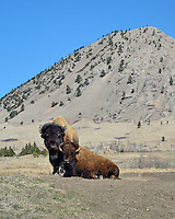 Bear Butte State Park, SD
