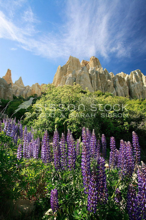 Lupins in full bloom below the Clay Cliffs at Omarama in the Mackenzie Country - top of the Waitaki Valley, south island New Zealand.