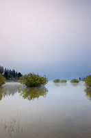 """Prosser Reservoir Morning""- Photographed from a kayak in the early morning at Prosser Reservoir, Truckee."