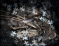 Dead pigeon on scattered jigsaw pieces