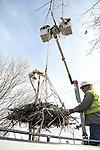 2017_02_22 JCP&L Osprey Nest Move