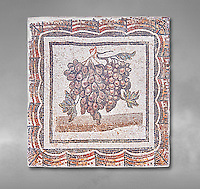 3rd century Roman mosaic panel of black and white grapes. From Thysdrus (El Jem), Tunisia.  The Bardo Museum, Tunis, Tunisia.  Grey background