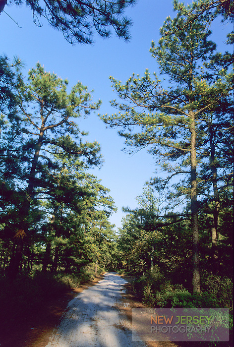 Path through the Pinebarren forest, New Jersey