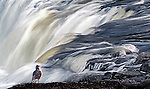 A seagull stands next to a torrent of water cascading down a waterfall on New Zealand's south island.