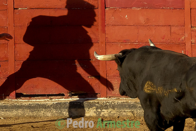 A participant's shadow is cast against the bullring wall as a bull during bull run of the San Sebastian de los Reyes Festival, near Madrid, on august 27, 2014. © Pedro ARMESTRE