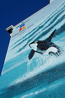 Leaping orca whale mural on the side of a building in downtown Vancouver, British Columbia, Canada
