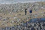 Gulls at Venice Beach in Half Moon Bay