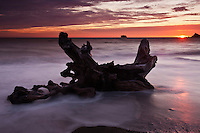 Driftwood in tide at sunset, Rialto Beach, Olympic national park, Washington, USA