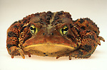 Frog/Toad