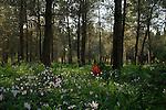 Koach forest near Elad