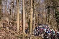 peloton in the forest up La Houppe <br /> <br /> 60th E3 Harelbeke (1.UWT)<br /> 1day race: Harelbeke &rsaquo; Harelbeke - BEL (206km)