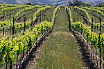Wente vineyards, Livermore, California