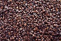 Kona coffee beans, Hawaii