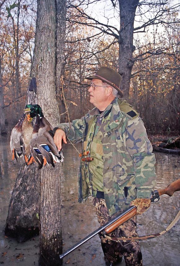 Duck hunter with mallards in flooded timber, Poor Boy Club near Humnoke, Arkansas