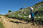 A woman walks to a weekly market in Despagne, an isolated village in southern Haiti where the Lutheran World Federation has been working with residents to improve their quality of life.