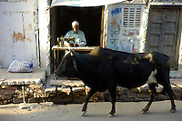 Bull walks past Indian man with sewing machine in village of Rohet in Rajasthan, Northern India