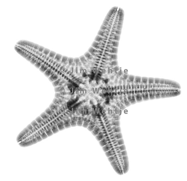 Starfish, X rays and Search on Pinterest
