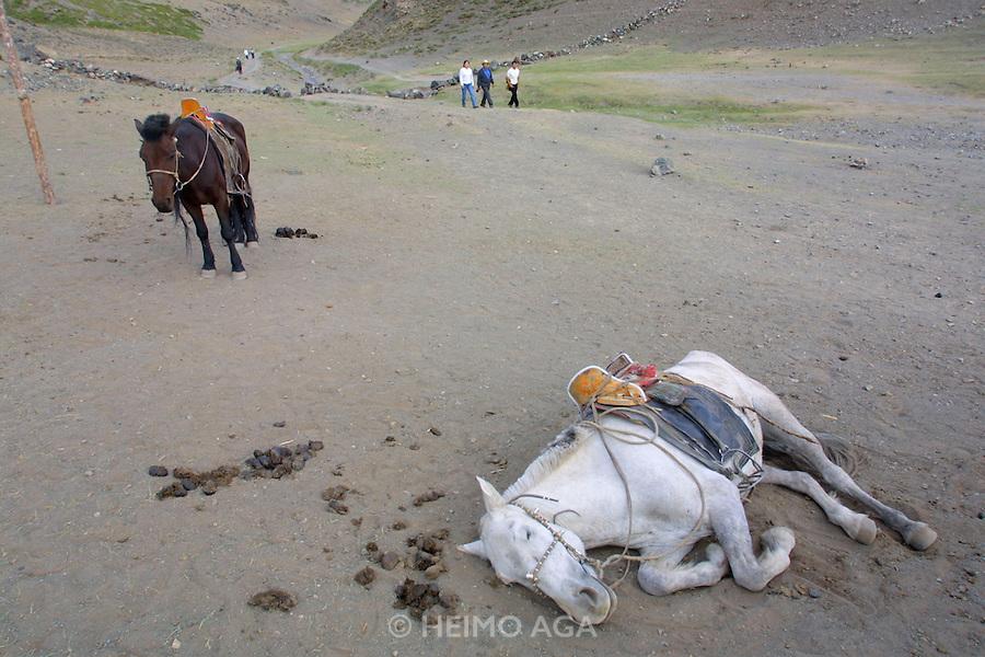 GOBI DESERT, MONGOLIA..08/23/2001.Gobi Gurvansaikhan National Park..Tourists, lazy horses at Yolyn Am..(Photo by Heimo Aga)