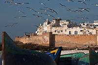 Afrique/Afrique du Nord/Maroc/Essaouira: Barques des pêcheurs et la médina et ses remparts