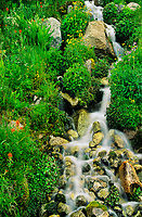 742900577 wildflowers and native plants grow along a smalll rock strewn stream and waterfall in the eastern sierras in central california