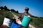 September 13, 2007, Louisburg, NC..Michael Jones, owner of Mae Farms, a sustainable hog farm, fills a feed bucket for the male stud hogs that are kept in a separate pen from most of the other hogs.