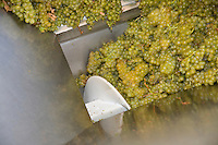STEMS are removed from CHARDONNAY grapes in a mechanical CRUSHER at JOULLIAN VINEYARDS - CARMEL VALLEY, CALIFORNIA