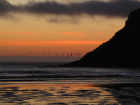 An orange sunset sky provides backdrop for pelicans flying at the beach below the Haceta Head Lighthouse.