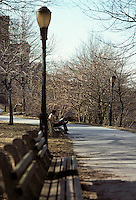 Central Park Pathway & Bench with Lone Man Reading. Bare Trees, Cold Day with Cold and Brown Tones. New York City, February 25, 1976